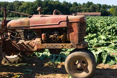 Connecticut Tobacco Fields 067Connecticut Tobacco Fields08
