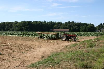 Connecticut Tobacco Fields 002