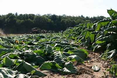 Connecticut Tobacco Fields 016