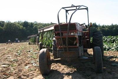 Connecticut Tobacco Fields 034