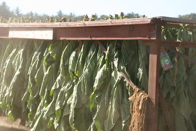 Connecticut Tobacco Fields 028
