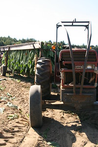 Connecticut Tobacco Fields 032
