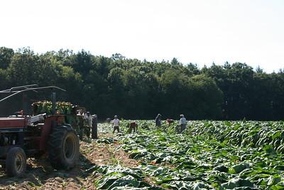 Connecticut Tobacco Fields 020