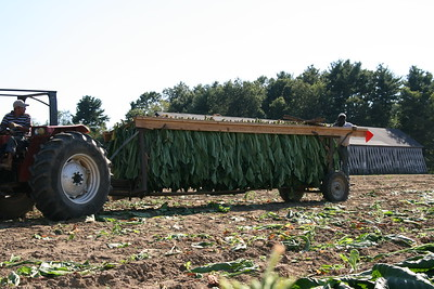 Connecticut Tobacco Fields 014