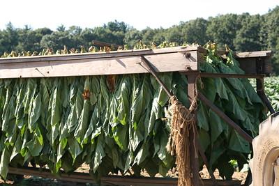 Connecticut Tobacco Fields 031