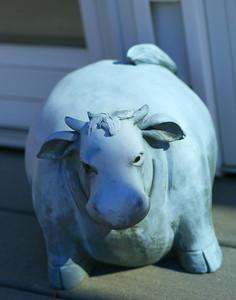 """Buddha Cow"""