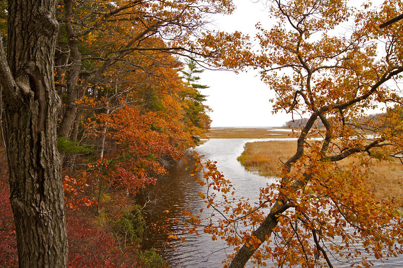 Fall foliage at the Rachel Carson National Wildlife Refuge. Established in 1966 to protect valuable salt marshes and estuaries for migratory birds.