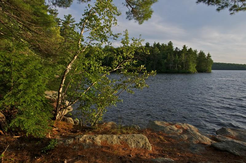 Parker Pond, evening light