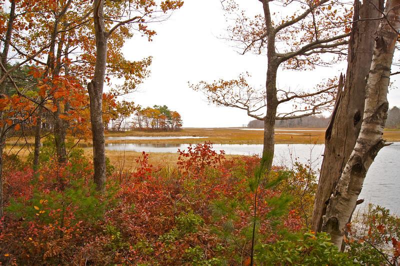 Fall foliage at the Rachel Carson National Wildlife Refuge; Wells, Maine.