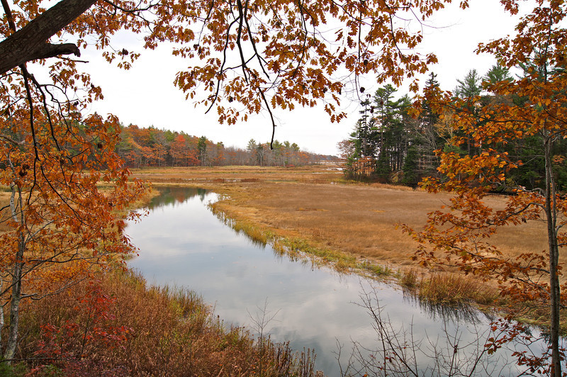 Fall foliage along a clear stream at the Rachel Carson National Wildlife Refuge; Wells, Maine.