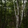 Steedman woods