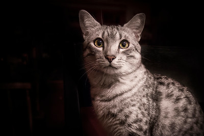 maverick cat-8298b