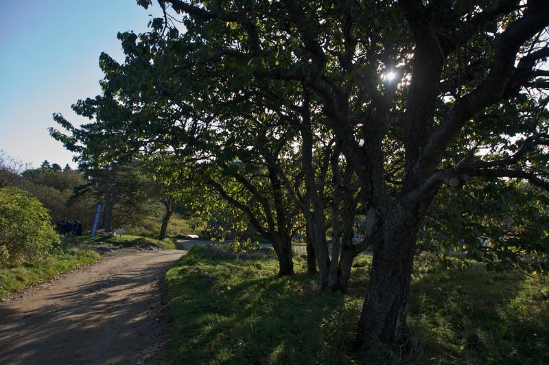 Island lane