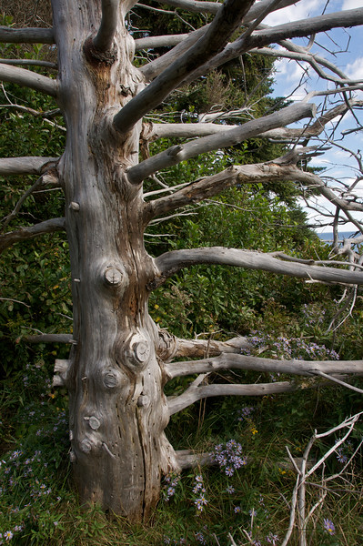 Bleached tree