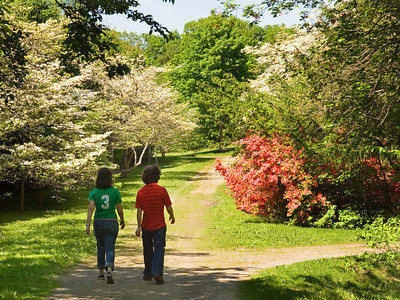 Couple on a Path of Azaleas
