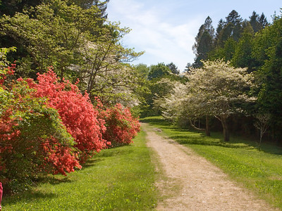 Flowery Path, Maudslay State park, Newburyport, MA