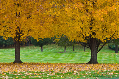 Autumn Trees, Stratham, New Hampshire