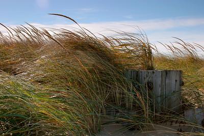 Dune Grass on the Beach, Plum Island MA