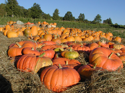 New England Farm in Autumn