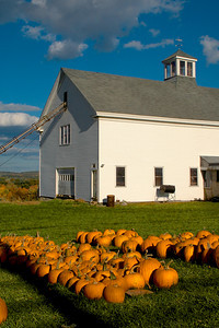Pumpkin Harvest At a Rural Farm