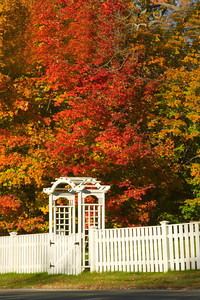 White Fence and Trellis in Autumn, Byfield MA