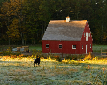 Red Barn and Frost Covered Field in The Early Morning