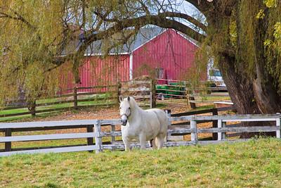 A Lone Horse Standing  in a Pasture, Newburyport MA