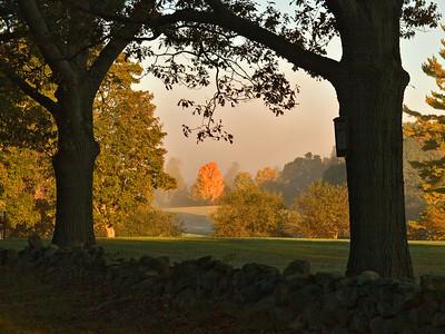Lone Maple Tree in The Morning Mist, Maudslay State Park, Newburyport MA
