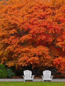 Lawn Chairs in Autumn