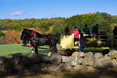 Horse Drawn Hayride on an Autumn Afternoon, Newburyport, Massachusetts