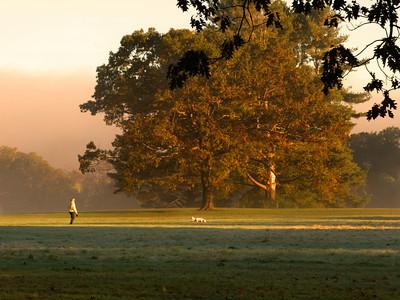 Morning Dog Walk in The Park, Maudslay State Park, Newburyport MA