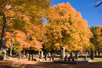 Colorful Maple Trees in Autumn at an Historic Cemetery, Salisbury MA