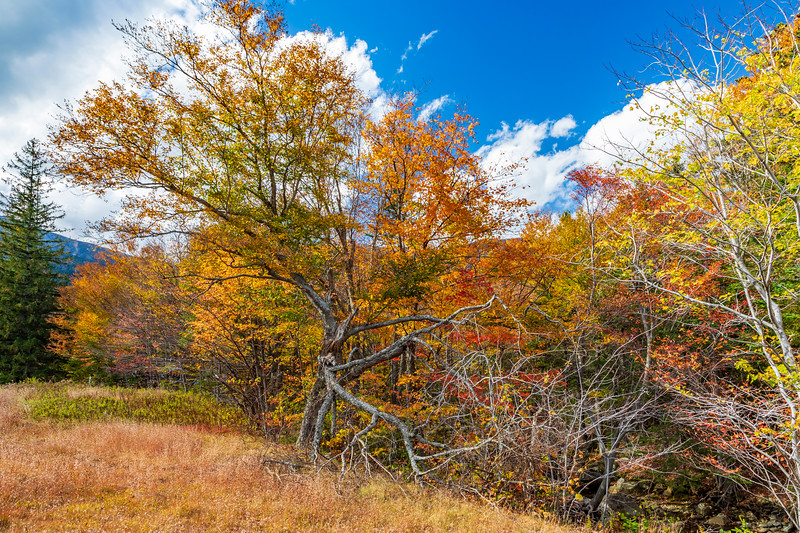 New Hampshire-White Mountain National Forest