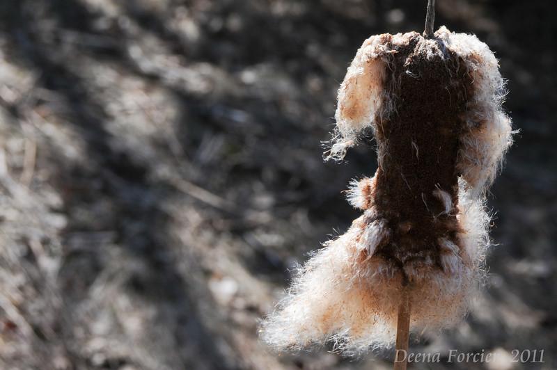 04/14/2011: Cat tails shedding