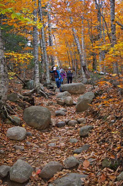 Fall foliage along the trail to Arethusa Falls; Crawford Notch State Park, New Hampshire.
