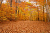 A thick carpet of fallen autumn leaves along a back road in Crawford Notch State Park, New Hampshire.