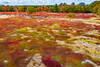 Maine-Dresden-Blueberry fields