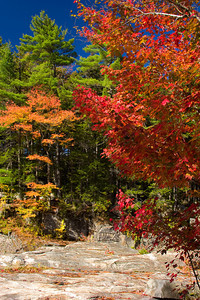Colorful Autumn Foliage along a Rocky Mountain Trail