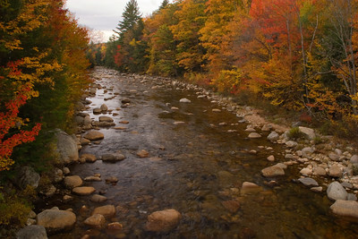 Mountain Stream With Colorful Autumn Leaves