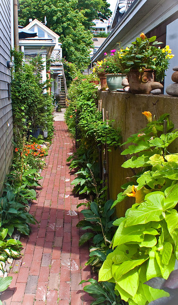 Alley Garden