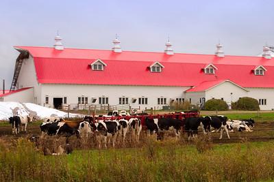 Vermont Dairy Farm