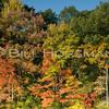 08-FallFoliage-047