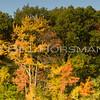 08-FallFoliage-126