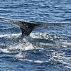 Whale Watch MemDayWknd08-0092