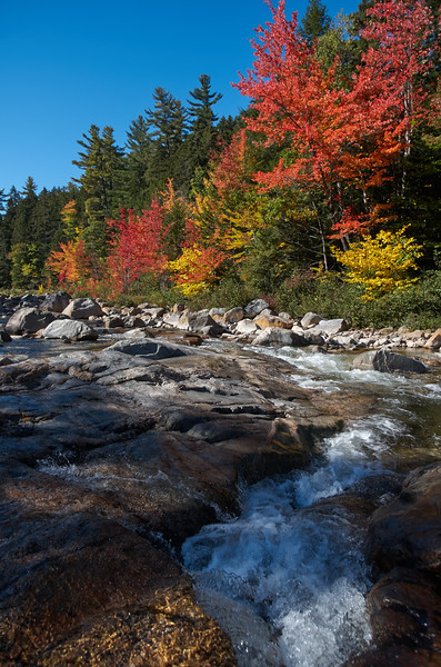 Foliage on the Swift River
