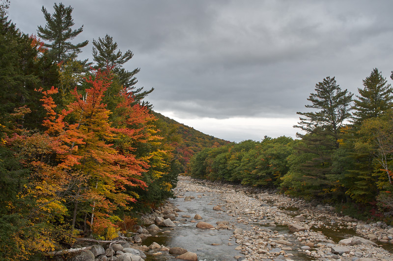Maples on the Pemigewasset