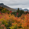 Foliage at Sugar Hill Overlook #2