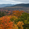 Foliage at Sugar Hill Overlook #1