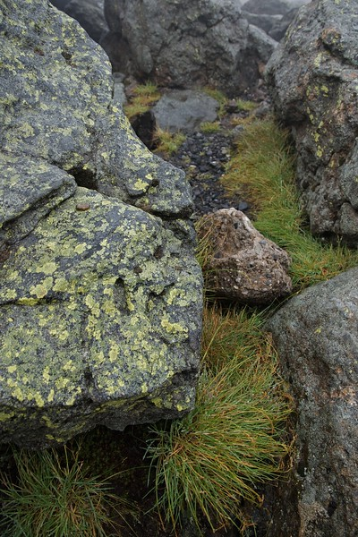 Rock, grass and lichen in the mist