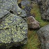 Rock, grass and lichen in the mist